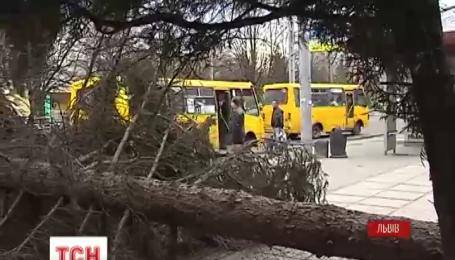 Двоє людей травмувались через буревій у Львові