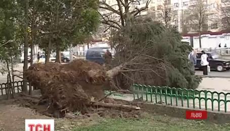 Троє людей травмувались через буревій у Львові