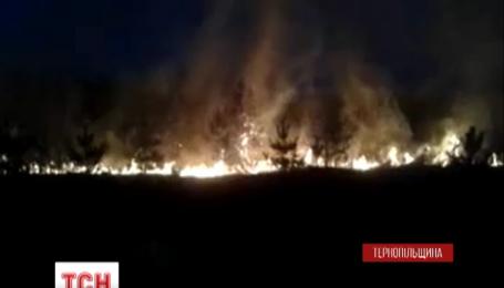 На Тернопільщині сталася лісова пожежа