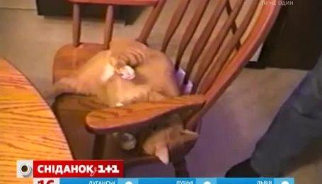 Кот научился выполнять акробатический трюк ради лакомства