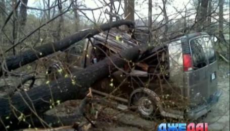 В США деревья завалили микроавтобус