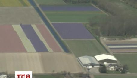 Мільйони квітучих тюльпанів розфарбували поля Нідерландів