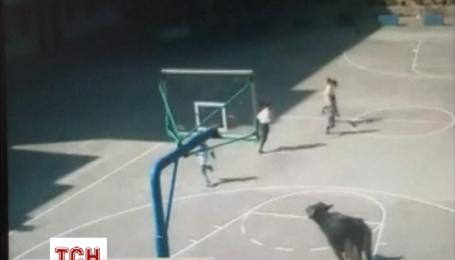 Розлючений буйвол увірвався до школи в Китаї