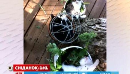 Мережу підкорюють коти у вазонах