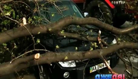Непогода в столице потрошила более десятка автомобилей