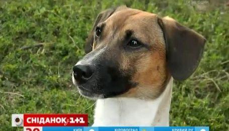 Настойчивая хозяйка научила разговаривать своего пса