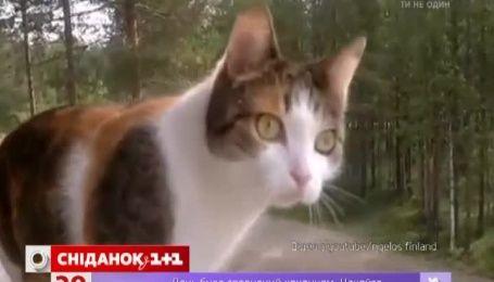 П'ять фінських котів отримали почесне звання героя