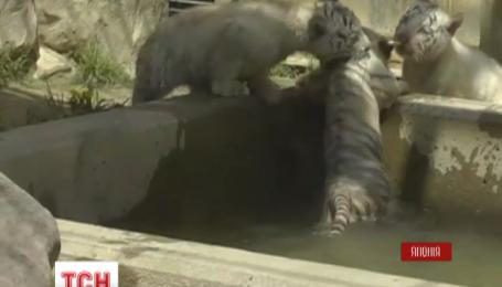 Конфузная премьера в японском зоопарке