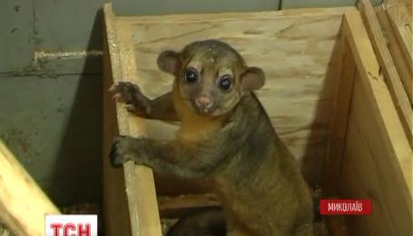 В николаевском зоопарке появилось странное животное