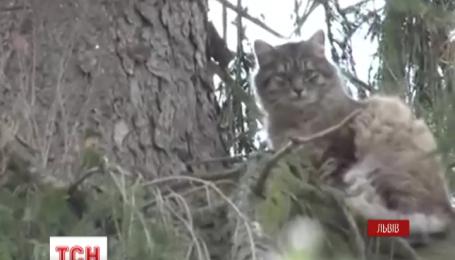 Спасатели Львова сняли котенка с 25 метрового дерева