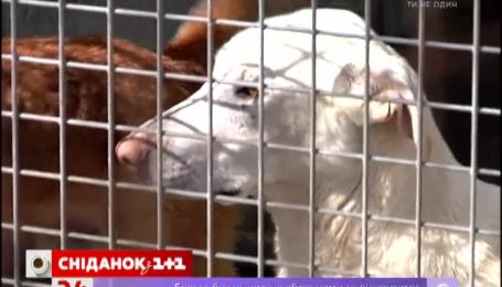 В итальянских приютах бездомных животных купают и трижды в день кормят
