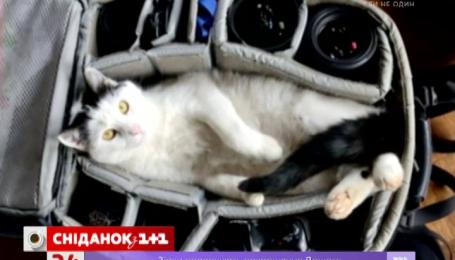 Добірка фото тварин, які не пускають господарів з дому