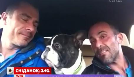 Мережу підкорює відео, де собака із двома чоловіками співає у машині