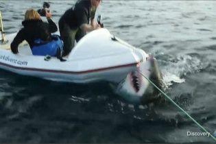 Исследование белой акулы едва не закончилось кровавой смертью ученых