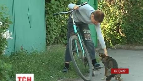 200 тысяч компенсации за укус бездомной собаки требует жительница Житомира от городской власти