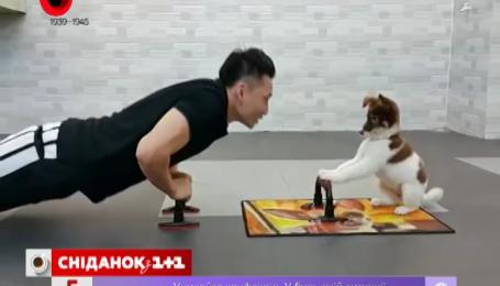 Парень тренируется со своей собакой