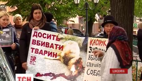 У Чернівцях захисники тварин звинувачують комунальників у масовому вбивстві собак