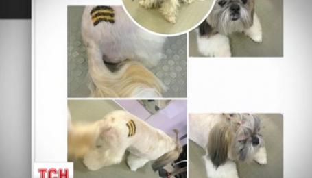 Российские собаки бесплатно могут на всю жизнь обзавестись георгиевским тату