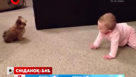 Видео общения малыша и щенка посмотрели 8 миллионов пользователей