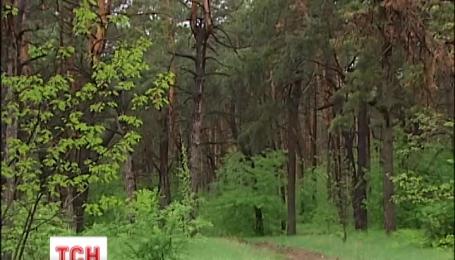 На Київщині спалахнула африканська чума свиней