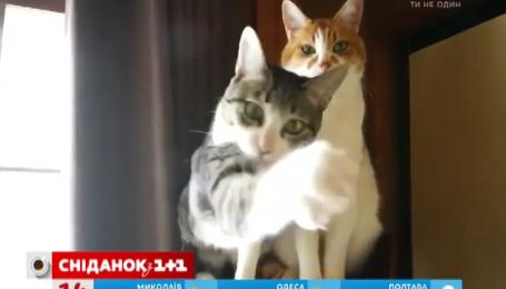 Коти мають різні темпераменти