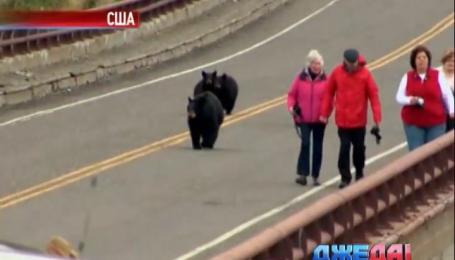 В США черные медведи напали на людей