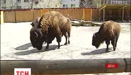 В столичному зоопарку померла одна із найстарших його мешканок