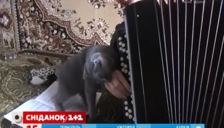 Інтернет підкорив кіт, який не любить музику