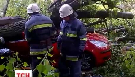 На автомобиль, который ехал по одной из улиц Киева, упало дерево