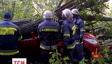 Накануне в Киеве дерево, которое упало на машину, убило пятилетнего мальчика