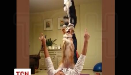 Пограничник научил собак акробатических трюков