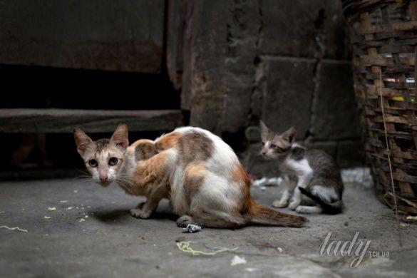 бездомные животные_2