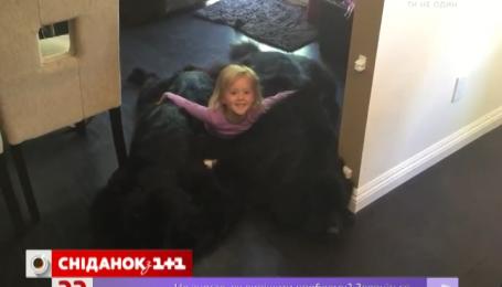 Дівчинка замість ліжка лежить на собаках