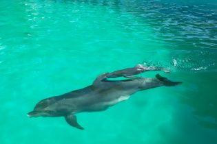 """Накануне 10-летия в Одесском дельфинарии """"Немо"""" родился дельфиненок"""