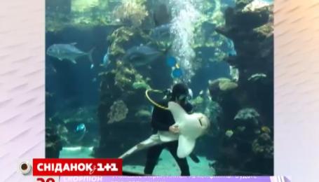 Сеть покорило видео, как аквалангист чешет живот акуле