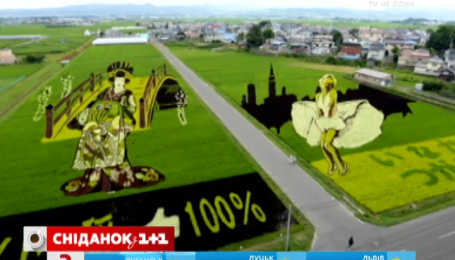 Японцы на рисовом поле нарисовали Мэрилин Монро
