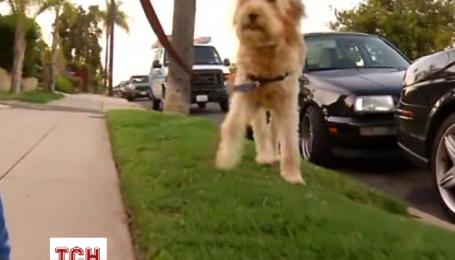 Американец у себя на газоне разбросал шоколад, чтобы отпугнуть собак