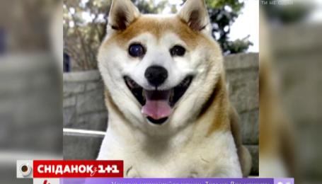 В Нью-Йорке живет самая счастливая собака в мире