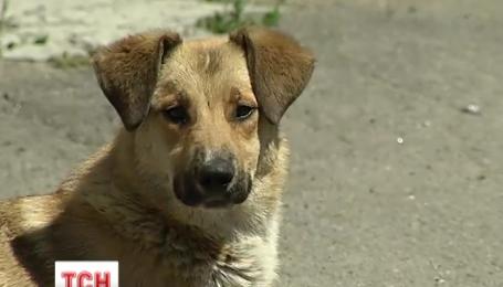В Киеве массово отравили собак