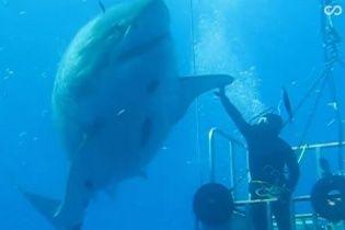 Пользователей Сети покорил бесстрашный дайвер, отпугнувший гигантскую акулу