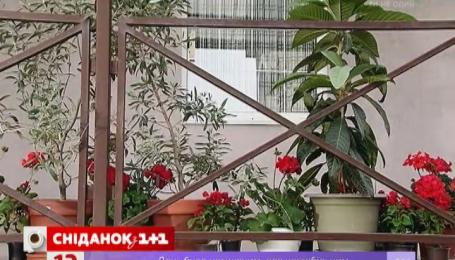Як правильно озеленювати балкони і тераси
