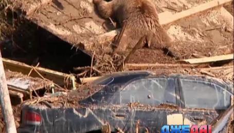 В результате наводнения по улицам Тбилиси плавали машины, бегемоты и львы