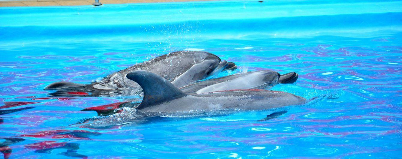 Минобороны РФ обзаведется боевыми дельфинами