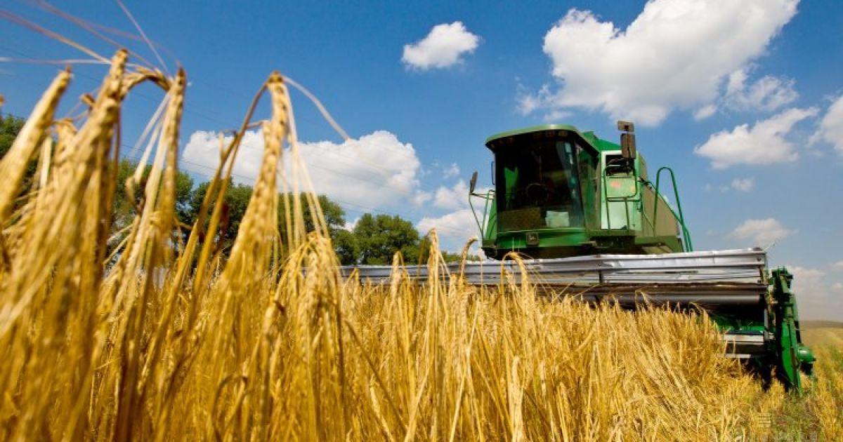 Аграрии уже начали жать зерновые, но рекордного урожая прошлого года могут не собрать