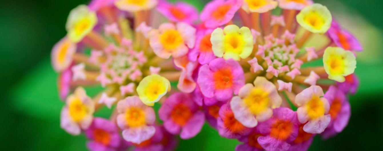 Что посадить в июле: садовые цветы второй половины лета