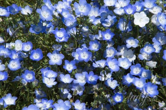 цветы_3