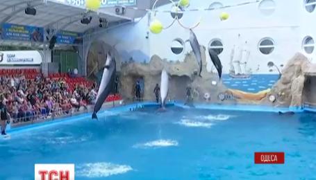 В Одессе может появиться еще один врач-дельфин