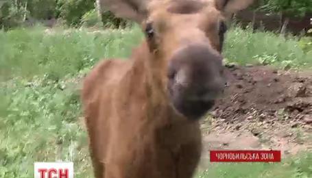 У Чорнобильській зоні вдалося приборкати масштабну пожежу