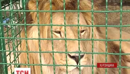 Житель Херсонщины вывез из Донбасса более полутора сотен животных