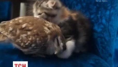 Японські кошеня і сова стали зірками інтернету